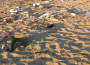 spiaggia rifiuti san pietro